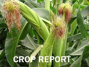 Weekly Crop Report for SD and ND