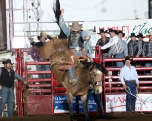 JJ Elshere, Hereford, S.D., won the saddle bronc riding year-end and average titles at the 2017 Badlands Circuit Finals Rodeo in Minot. Elshere has qualified for the Badlands Circuit Finals Rodeo at least a dozen times, and has won several titles at it.
