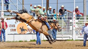 A top string of saddle broncs, including National Finals horses are in the lineup for the Match Bronc Ride held during the Faith Stock Show & Rodeo, Faith, SD.