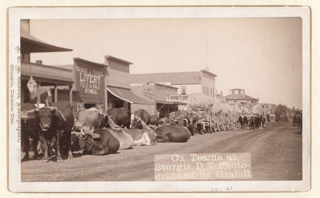 Freight and passengers arrived in early-day Sturgis by oxen trains.