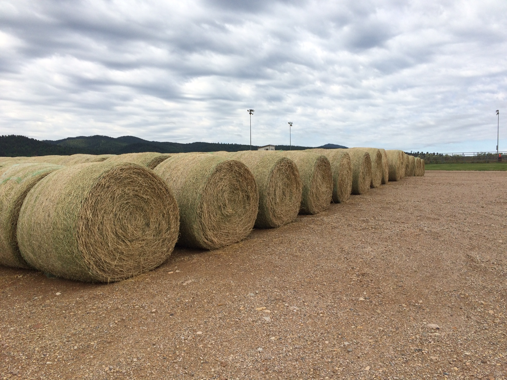 South dakota spink county doland - Bismarck N D A Hay Donation Lottery Program Set Up In North Dakota To Help Drought Stricken Ranchers Is Being Expanded To Producers In South