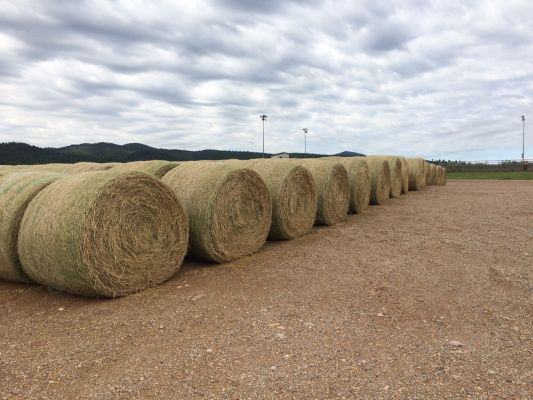 Drought-Hay Lottery