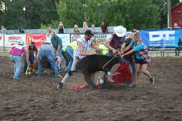 The dress-a-calf contest is always a popular event at the fair.  It follows the community picnic, mutton bustin' and calf scramble this Friday.  All events are free to the public.
