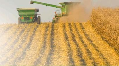 Wheat and Oat Stocks Down