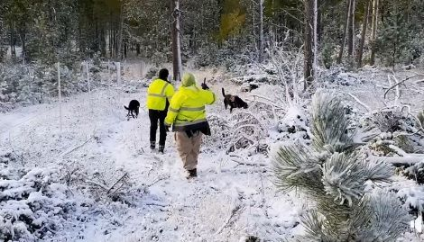 Wolfpack Working Dogs help in the search for a missing hunter Saturday.