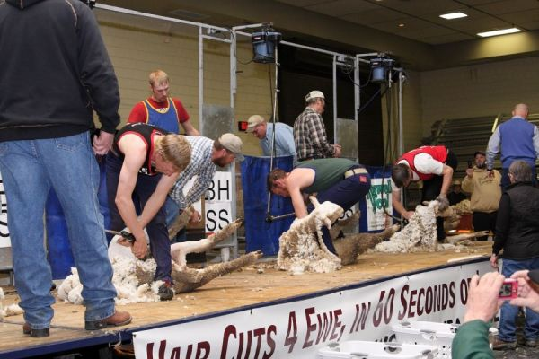 From champion shearing to mutton bustin' to stock dog trials, the All American Sheep Day held during the Black Hills Stock Show offers interesting, educaitonal and entertaining events.